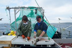 cod-pit-fishing-fogo