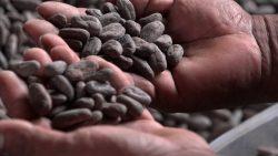 el-cacao