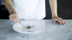 the-art-of-plating-chefs-cut-beyond-the-forest-with-rasmus-kofoed
